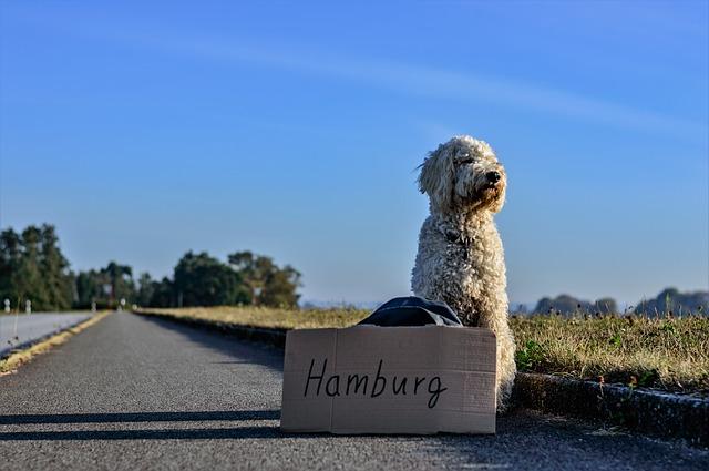 pes na cestě do Hamburku