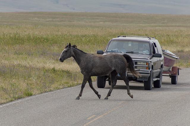 kůň auto silnice