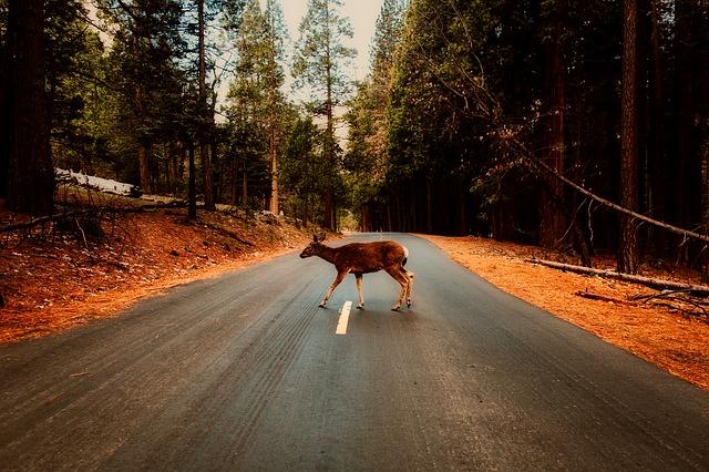 silnice zvěř les